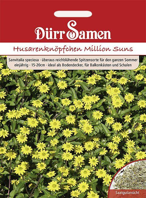 Dürr Samen Husarenknöpfchen  Million Suns, einjährig, 15-20cm