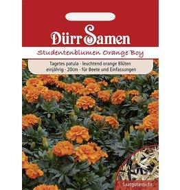 Dürr Samen Studentenblumen  Orange Boy, orange, einjährig, 20cm