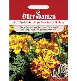 Dürr Samen Studentenblumen  Bonanza Bolero, goldgelbe und rote Färbung, einjährig, 20cm