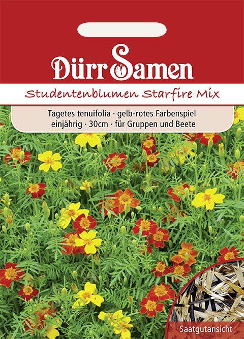 Dürr Samen Studentenblumen  Starfire, hellgelb bis rotbraune Färbung, einjährig, 30cm