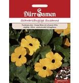 Dürr Samen Schwarzäugige Susanne  Orange mit schwarzer Mitte, einjährig, 200cm