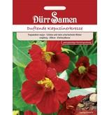 Dürr Samen Kapuzinerkresse  Rot, rankend, einjährig, 200cm