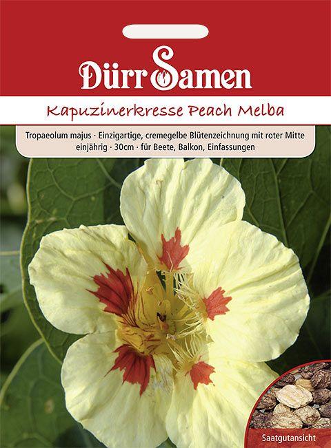 Dürr Samen Kapuzinerkresse  Peach Melba, einjährig, 30cm