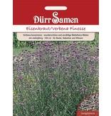 Dürr Samen Eisenkraut  Finesse, lilafarbene Blüten, ein-mehrjährig, 120cm