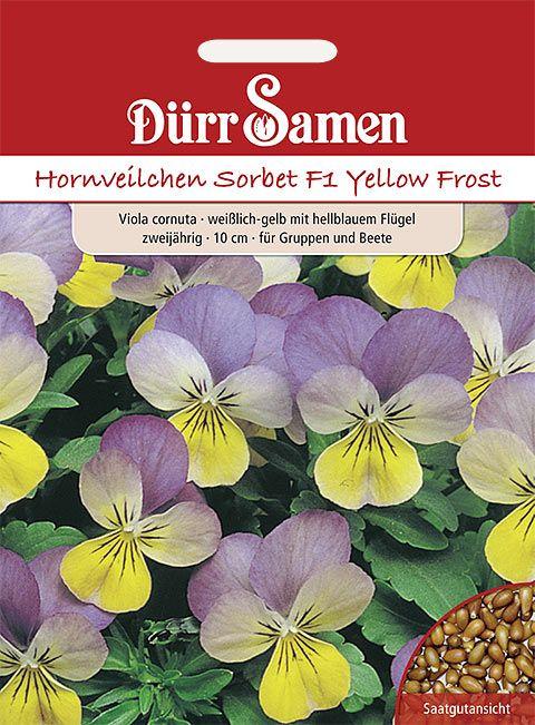 Dürr Samen Hornveilchen  Sorbet F1 Yellow Frost F1, weißlich-gelb mit hellblauem Flügel, zweijährig, 10cm