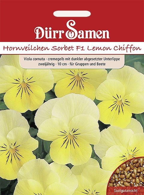Dürr Samen Hornveilchen  Sorbet F1 Lemon Chiffon F1, gelb mit Auge, zweijährig, 10cm