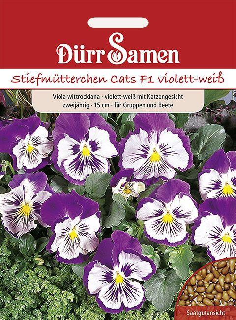 Dürr Samen Stiefmütterchen  Cats F1 violett-weiss, zweijährig, 20cm