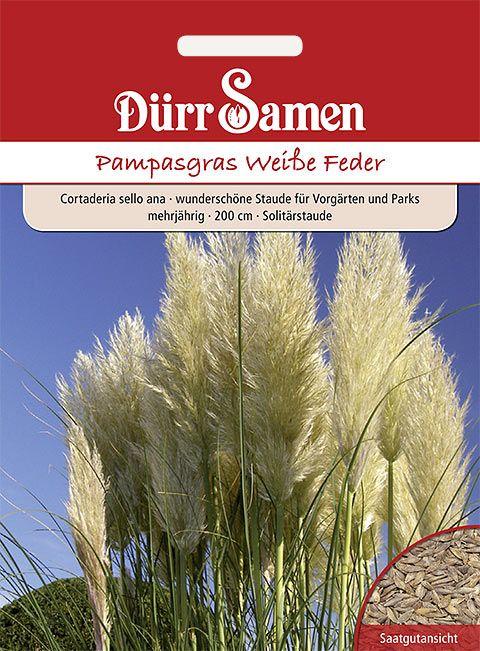 Dürr Samen Pampasgras Solitärstaude, mehrjährig, 200cm
