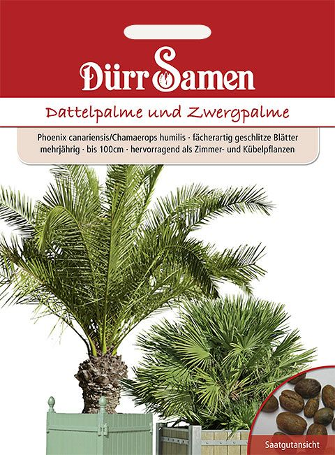 Dürr Samen Dattelpalme und Zwergpalme  Mix, mehrjährig, bis 100cm