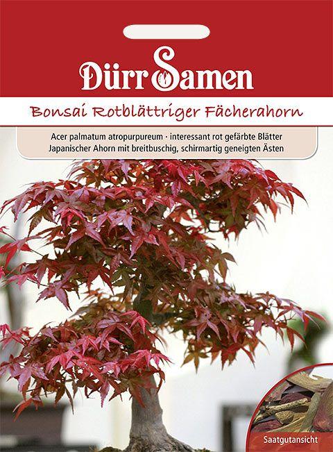 Dürr Samen Bonsai-Samen  Rotblättriger Fächerahorn,