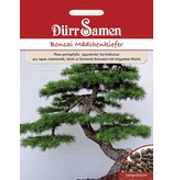 Dürr Samen Bonsai-Samen  Mädchen-Kiefer, sehr eleganter und leicht zu formender Wuchs