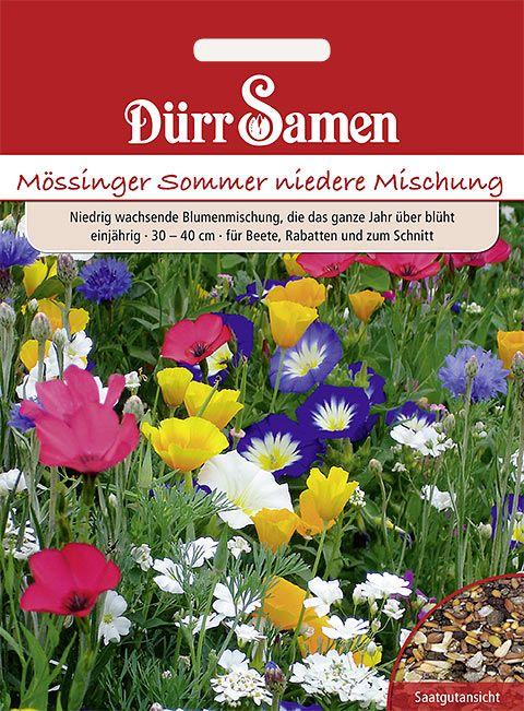 Dürr Samen Blumenmischung Mössinger Sommer nieder, einjährig, 30– 40cm
