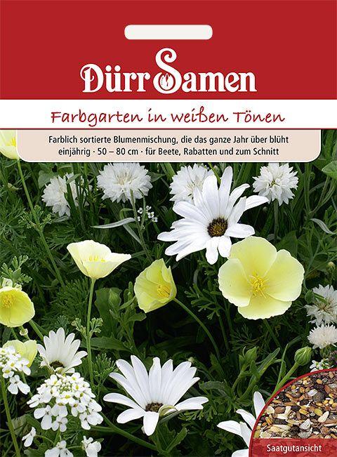 Dürr Samen Blumenmischung Traumgarten weiße Töne, einjährig, 50–80 cm