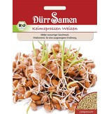 Dürr Samen BIO-Keimsprossen  Weizen