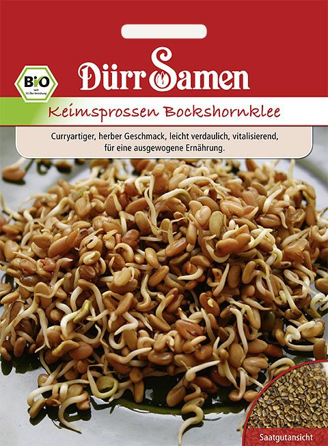 Dürr Samen BIO-Keimsprossen  Bockshornklee