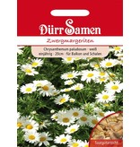 Dürr Samen Zwergmargeriten Weiß, einjährig, 20cm