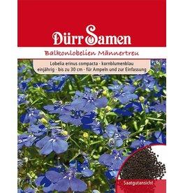 Dürr Samen Männertreu  Kornblumenblau, einjährig, bis zu 30cm