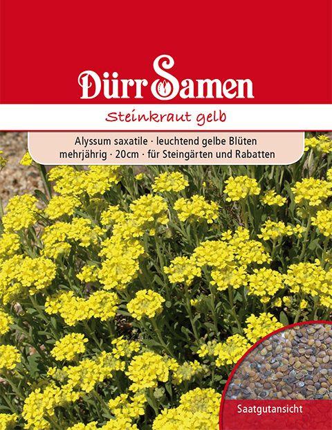 Dürr Samen Steinkraut Gelb, mehrjährig, 20cm