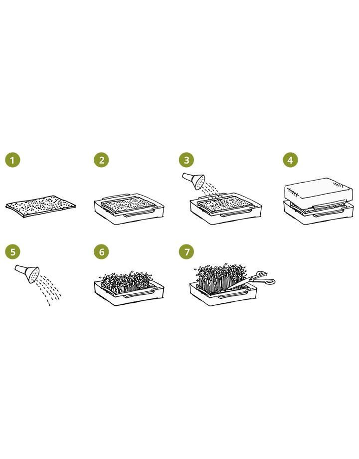 Cressbar® Cresspad SenfCress BIO