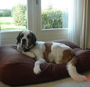 Dog's Companion® Hondenbed Chocolade Bruin