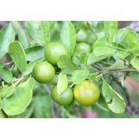 Geschirrspültabs Grapefruit & Limette - Marcel's Green Soap
