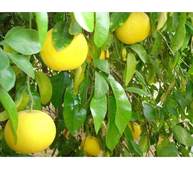 Vaatwastabletten Grapefruit & Limoen