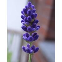 Handzeep navulfles Lavendel & Rozemarijn (1000 ml)