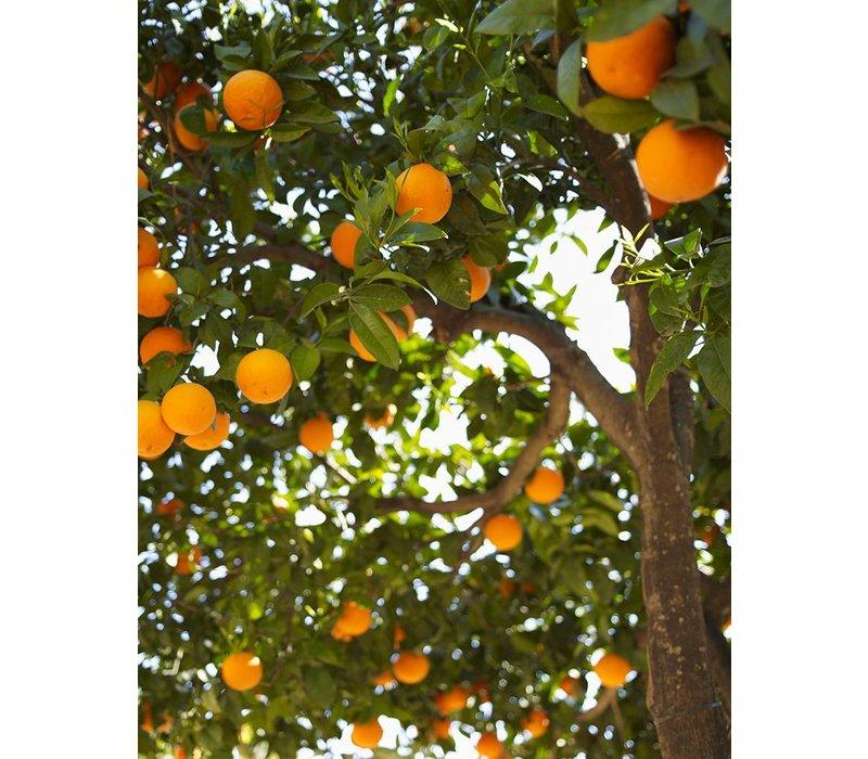 Handzeep navulfles Sinaasappel & Jasmijn (1000 ml)