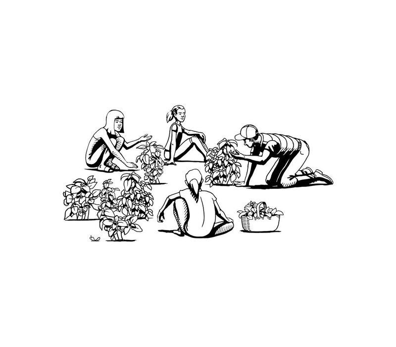 Spülmittel Basilikum & Vetiver Gras (500ml)