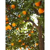 Nettoyant Tout Usage Orange & Jasmin (750ml)
