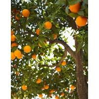 Liquide Vaisselle Orange & Jasmin (500 ml)