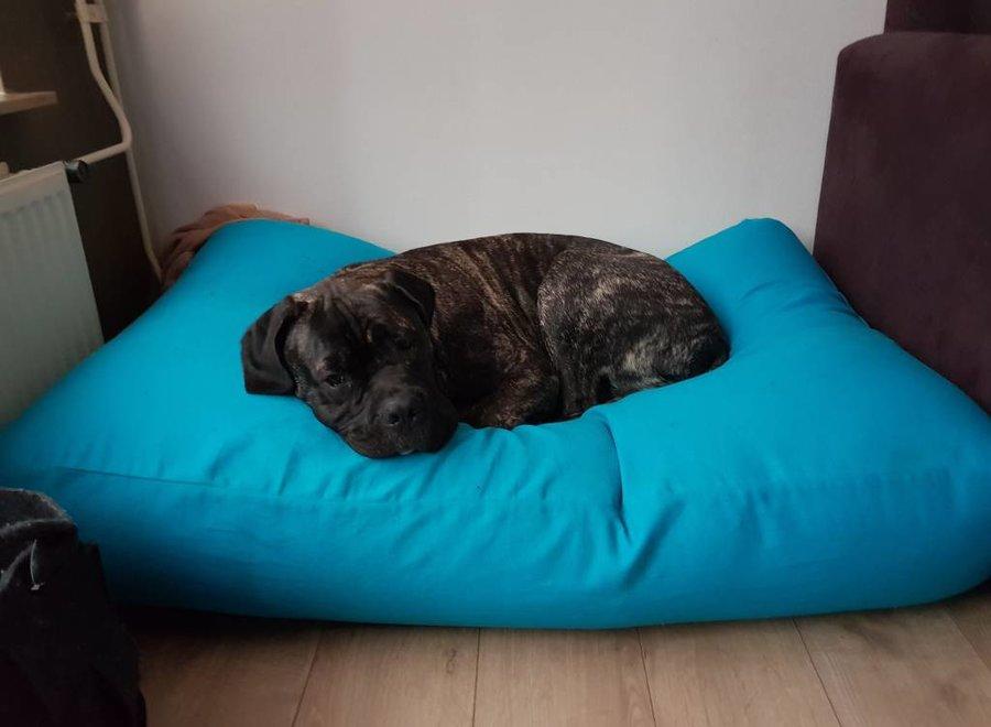 Hundebett Aqua Blau Large