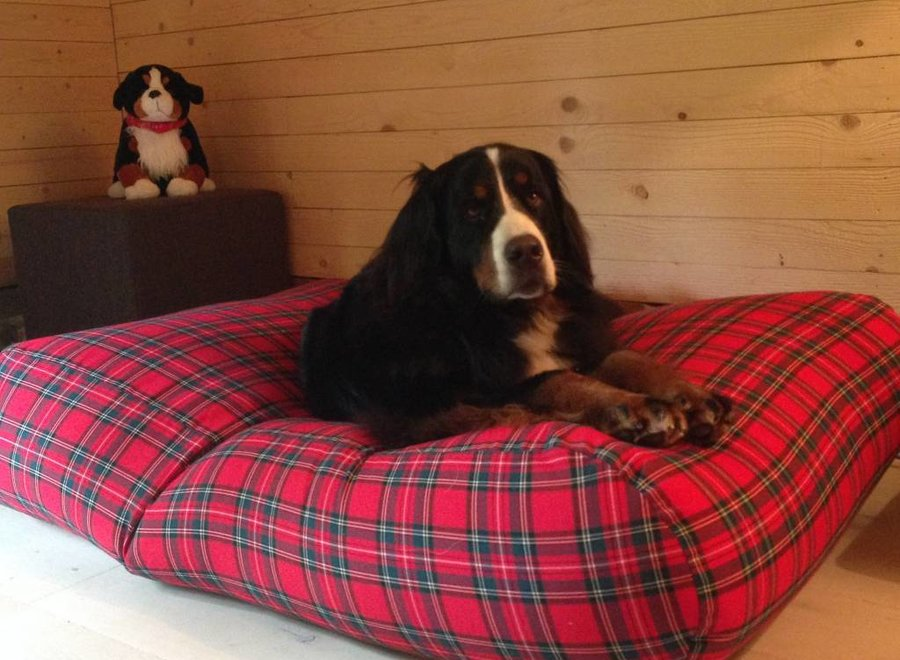 Hundebett Royal Stewart Small