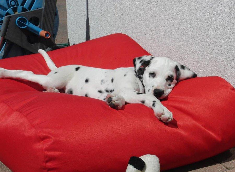 Hundebett Rot (beschichtet) Medium