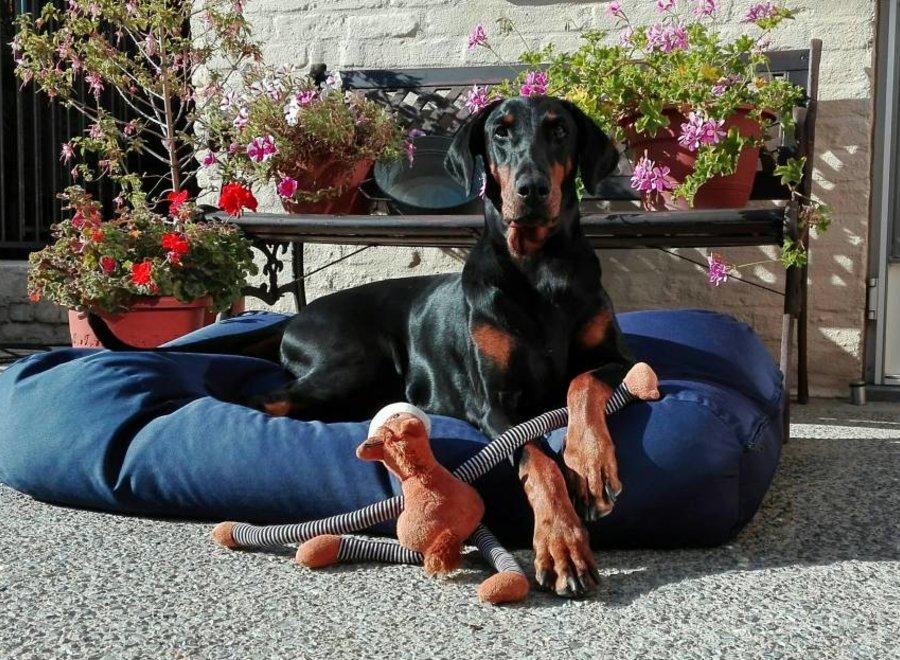 Hundebett Dunkelblau (beschichtet)