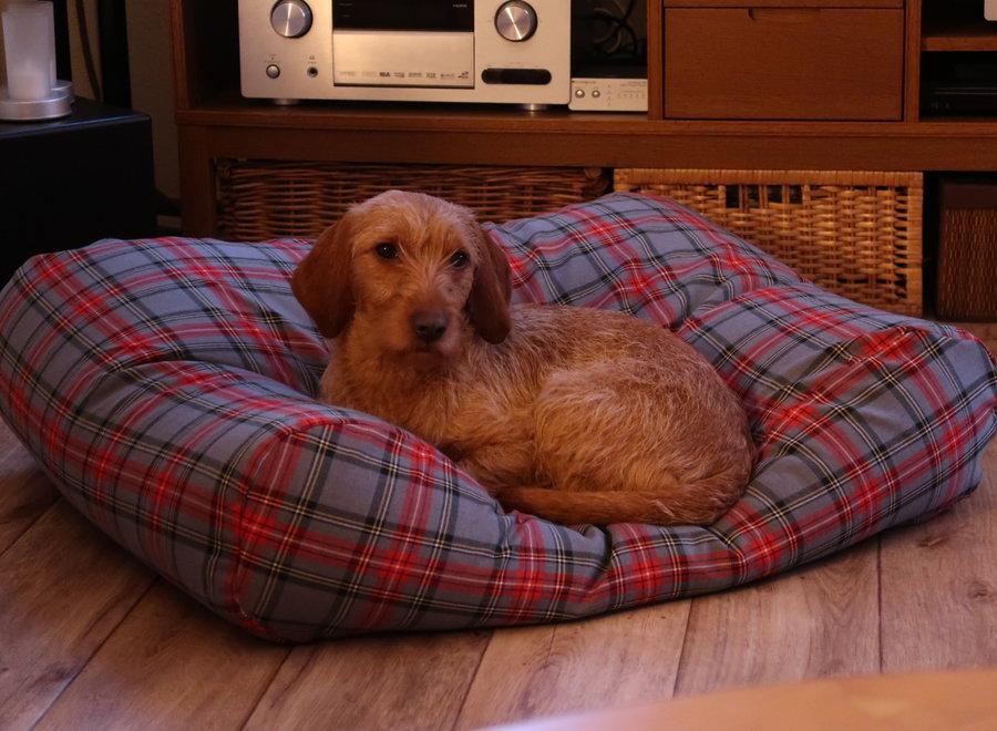 Hundebett Scottish Grau Superlarge