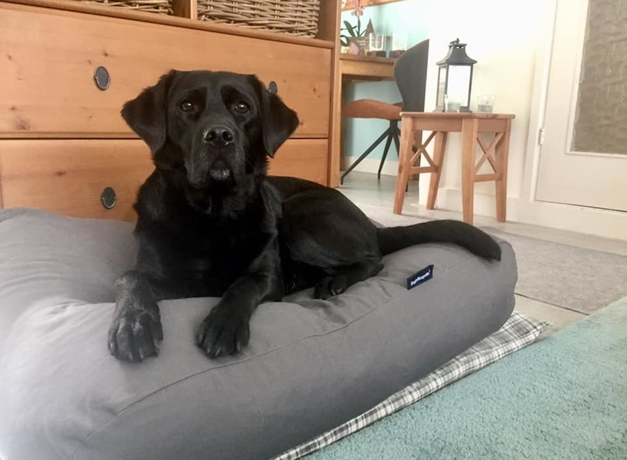Hundebett Mausgrau Medium