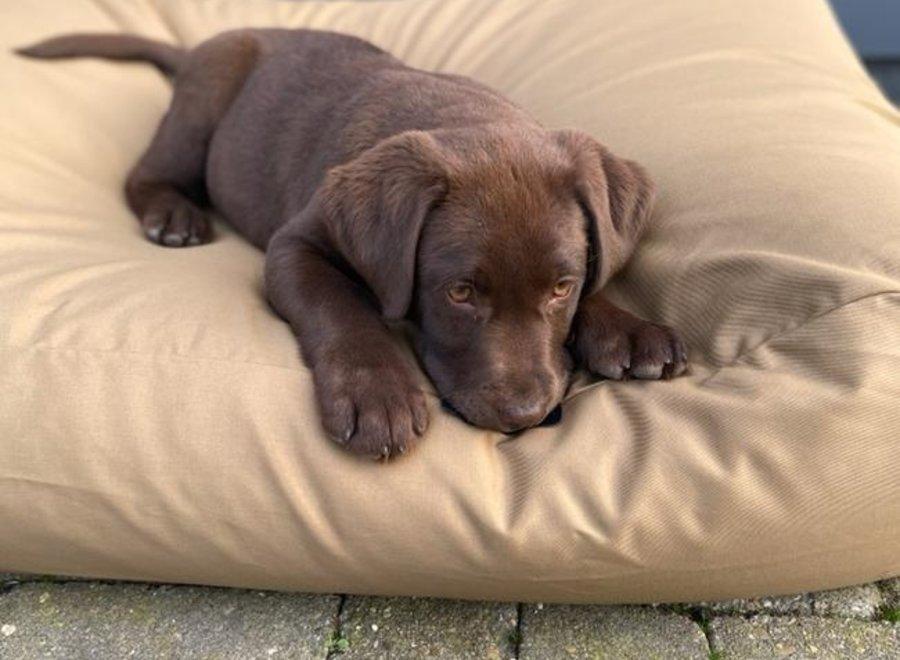 Hundebett Khaki (Beschichtet) Large