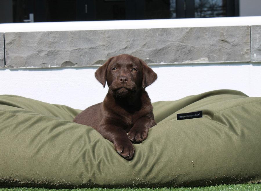 Hundebett Olivgrün (beschichtet) Large