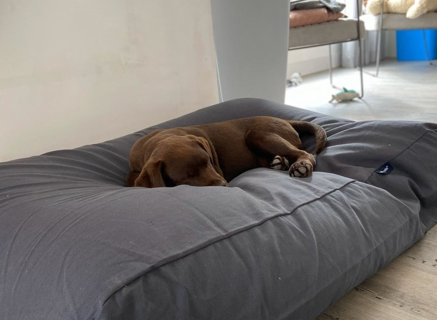 Hundebett Granit Grau Baumwolle