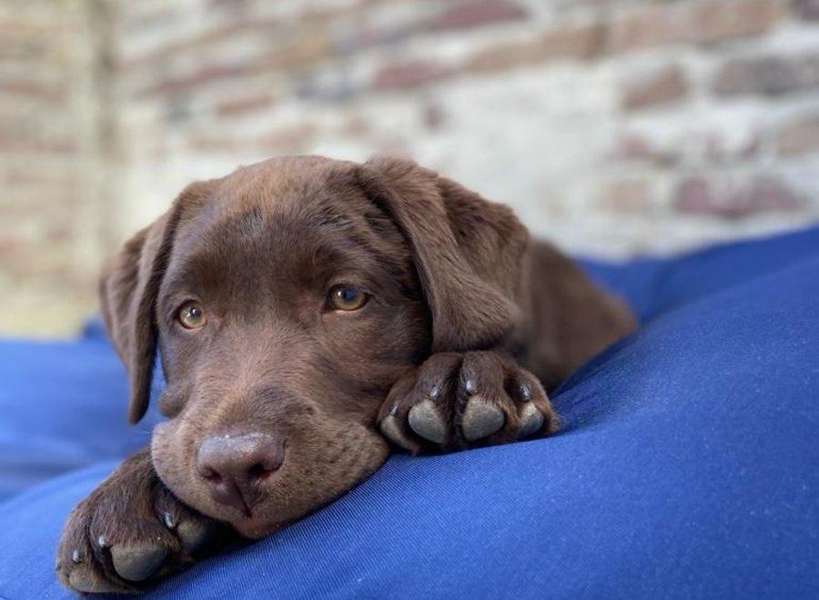 Hundebett Dunkelblau (Beschichtet) Medium