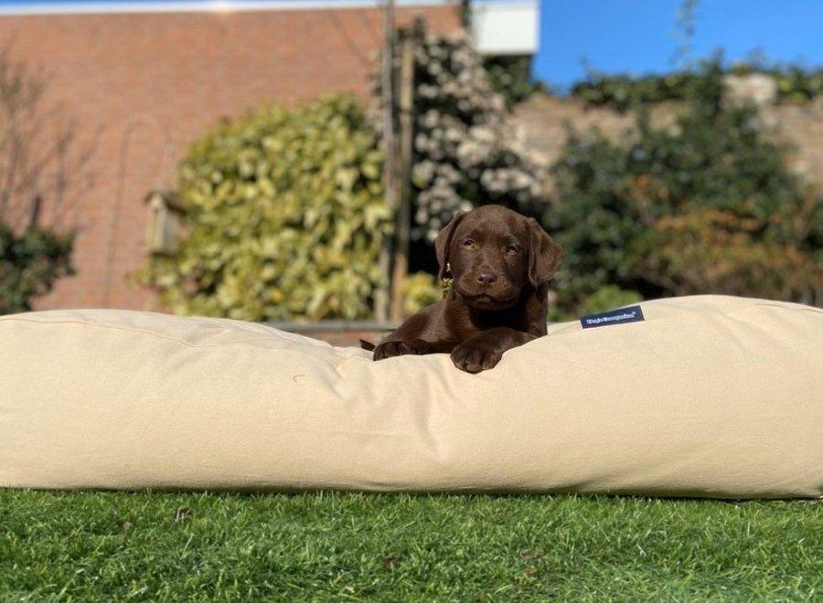 Hundebett Beige Superlarge