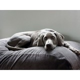 Hundebetten Grau