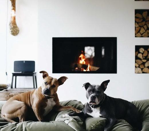 Neue Hundekissen und Bezüge