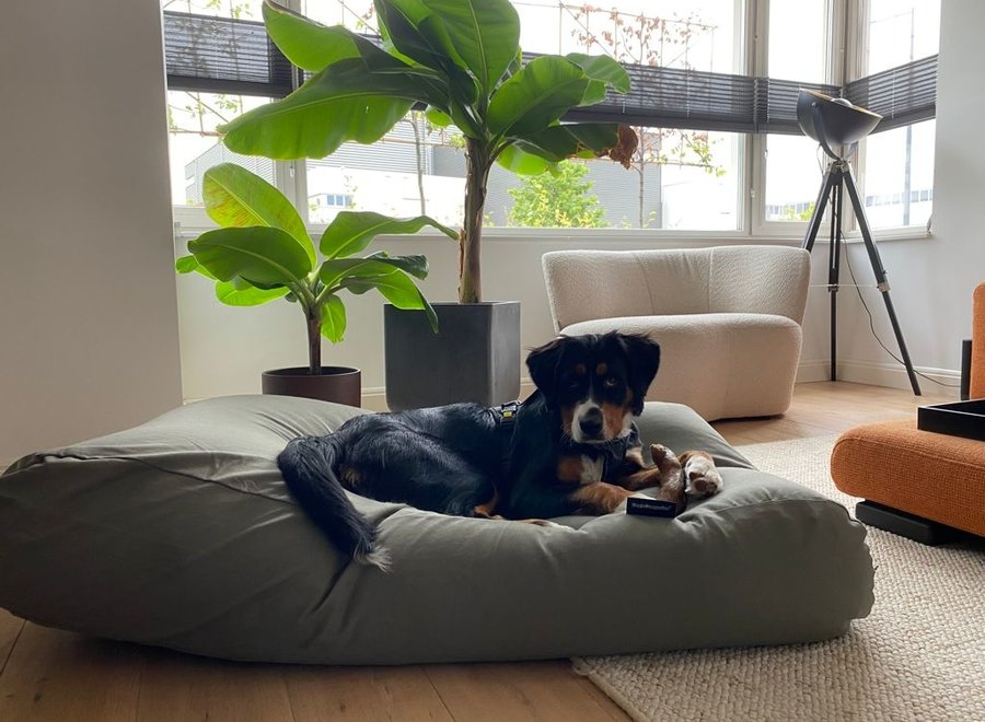 Hundebett Basalt Superlarge