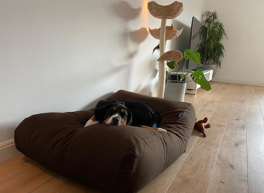 Hundebett Schokolade Braun Medium