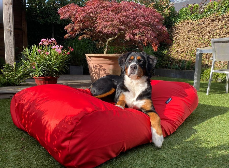 Hundebett Rot (beschichtet) Large