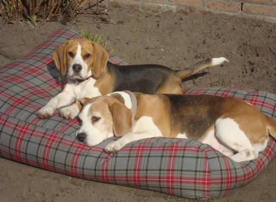 Hundebett Scottish Grau Medium