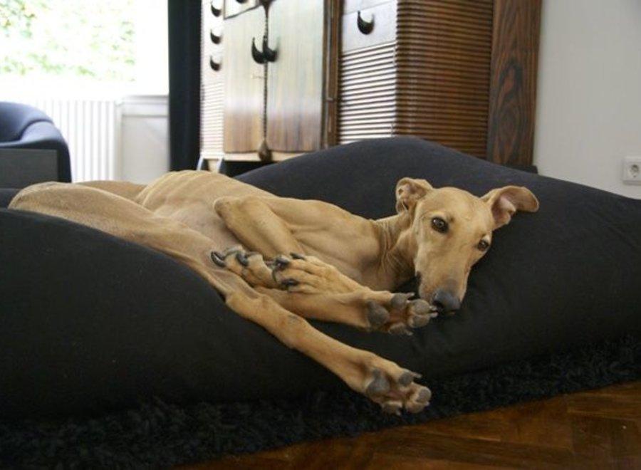 Hundebett Schwarz Large