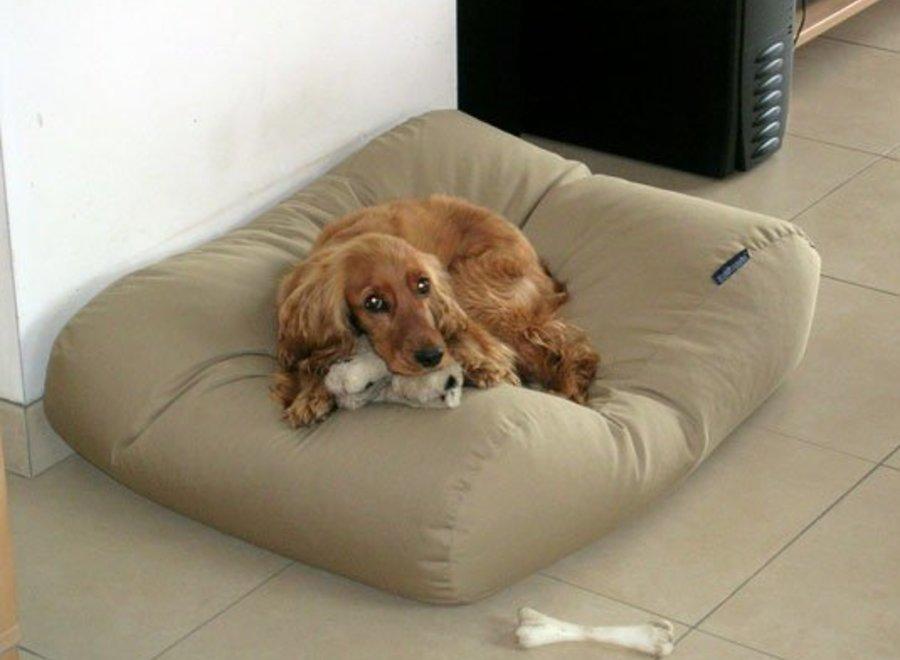Hundebett Beige Medium